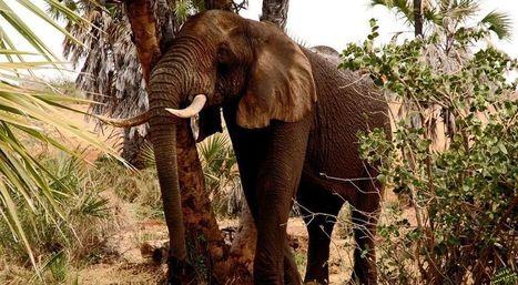 Safari Tanzanie - Voyage et Séjour Sur Mesure | General News | Scoop.it