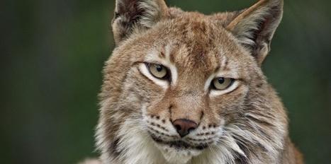 10 chiffres alarmants sur la biodiversité en France | Planète, Nature et Biodiversité | Scoop.it