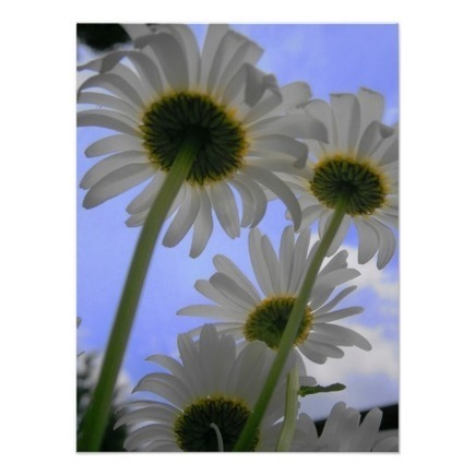Daisy Day Poster from Zazzle.com | Wall Art | Scoop.it