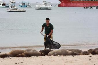 Survival of the Galapagos sea lion | Amocean OceanScoops | Scoop.it