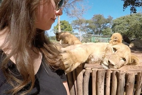 The True Cost of Your Cute Lion or Tiger 'Selfie' (Video) | Oceans and Wildlife | Scoop.it