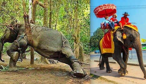 This Is What Happens Before The Elephant Ride | Nature Animals humankind | Scoop.it