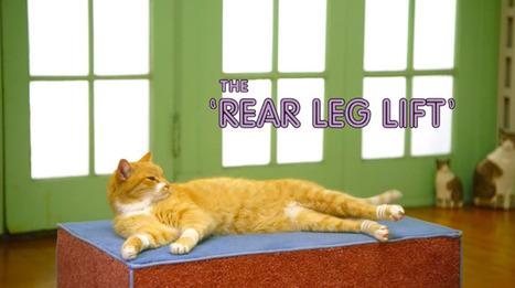 Aerobics for cats...   Art for art's sake...   Scoop.it