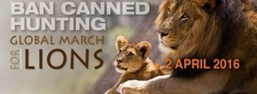 Join the 2016 Global March for Lions | Trophy Hunting: It's Impact on Wildlife and People | Scoop.it
