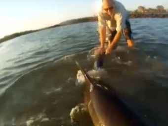 Australian TV reporter rescues a stranded dolphin | Dolphins | Scoop.it