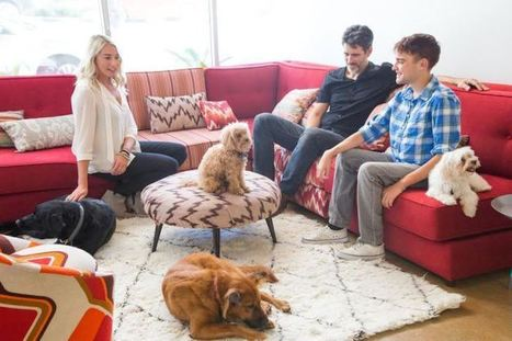DogVacay, Airbnb For Dogs, Nabs $25M In Funding | New Tech & New Service | Scoop.it