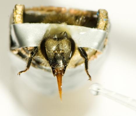 Le sens du goût à travers les pattes | EntomoScience | Scoop.it