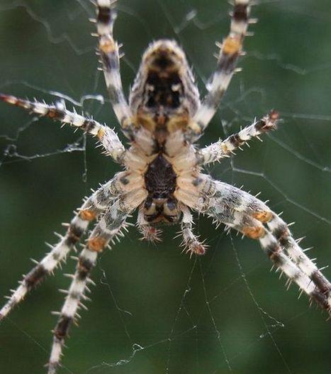 Bientôt des toiles d'araignées pour surveiller l'environnement ? | pour mon jardin | Scoop.it