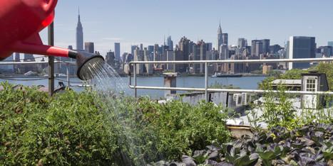 Agriculture urbaine : ce dont elle est capable (et ce qu'elle ne pourra ... - Le Huffington Post | rngobagal@efficom-lille.com | Scoop.it
