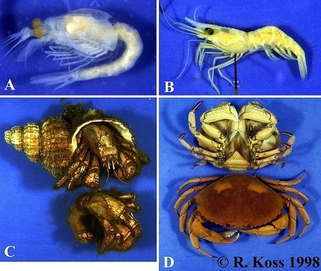 ZOOL 2250 Arthropod diversity quiz I   القشرات   Scoop.it
