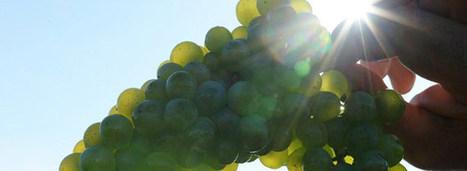 Bordeaux Winemakers Warm to 2014 Vintage   Vitabella Wine Daily Gossip   Scoop.it