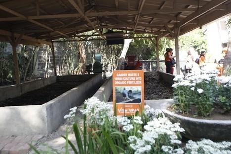 Urban Gardening launched in Las Piñas | sustainablity | Scoop.it