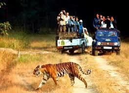 Golden Triangle Tiger Tour Package | Golden Triangle Tour operator | Scoop.it