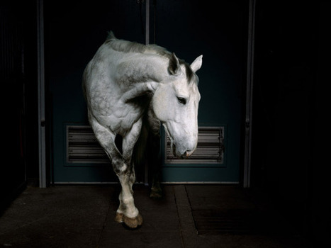 Four Horses by Charlotte Dumas | Art, photography, design, tech, culture & fashion | Scoop.it