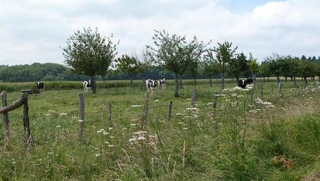 L'agriculture française retrouve ses racines - RFI | Pour une agriculture et une alimentation respectueuses des hommes et de l'environnement | Scoop.it