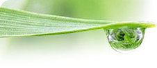 Biobased Solutions Channel | Biorenewable Chemicals & Plastics | Scoop.it