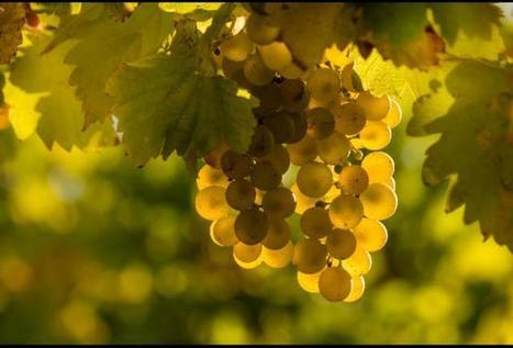 Positive Marketing From The Other DWI, Deutsches WeinInstitut (Wines of Germany) | Vitabella Wine Daily Gossip | Scoop.it
