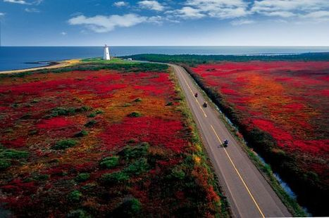 L'Acadie, royaume du homard bleu - 5e congrès mondial Acadien « les retrouvailles » | Nos Racines | Scoop.it