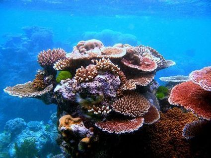 Les coraux font l'odeur des océans et régulent le climat - Futura Sciences | Ocean | Scoop.it