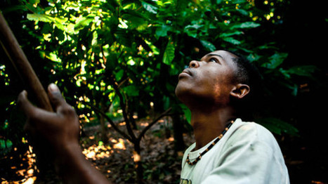 Bringing chocolate home: Africa is more than the world's cocoa basket, says Madécasse | FairTrade | Scoop.it