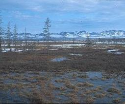 Scientists say new signs of global warming in Russian Arctic | Sustain Our Earth | Scoop.it