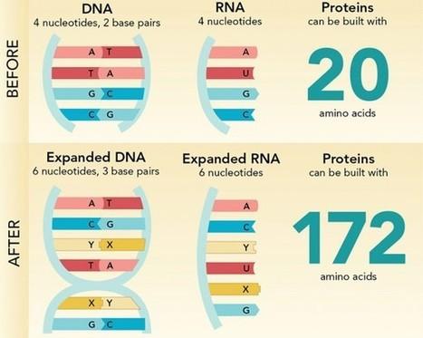 Nuevas letras para el código genético | microBIO | Scoop.it