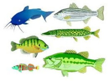 (TA) (EN) - Glossary of Fish Names | Tasty Appetite | Glossarissimo! | Scoop.it