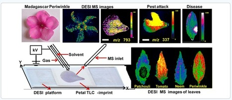 Understanding the Molecular Signatures in Leaves and Flowers by Desorption Electrospray Ionization Mass Spectrometry (DESI MS) Imaging - Journal of Agricultural and Food Chemistry (ACS Publications) | frontpoint security reviews | Scoop.it