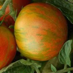 Everything You Need to Know to Grow Organic Tomatoes | Best Home and Garden | Scoop.it