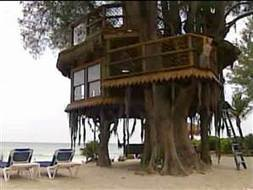 Couple fighting to save 2-story, dream tree house | Strange days indeed... | Scoop.it