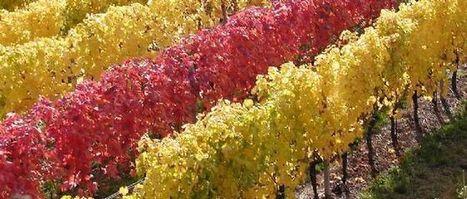 Le tableau des millésimes de 2005 à 2014 | Le vin quotidien | Scoop.it