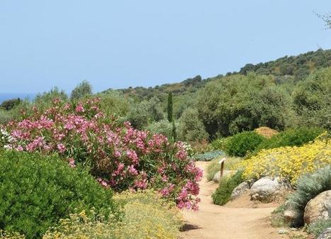 Parc de SalecciaUn fabuleux jardin en plein maquis | Balagne Tourisme | Scoop.it