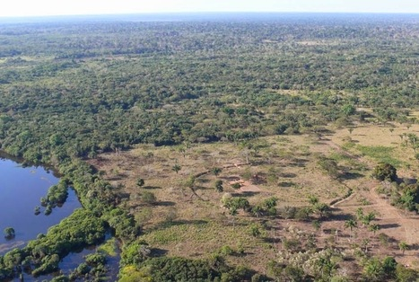 'Amazonian savannah' supported ancient civilizations before rainforest took over | The Archaeology News Network | Amériques | Scoop.it