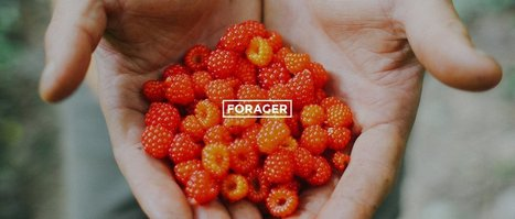 David Siller: Professional Forager - Organic Connections | Healthy Living | Scoop.it