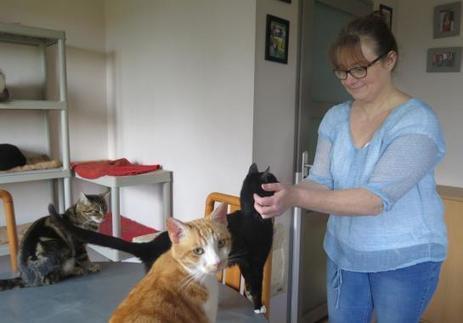 Limeil - Valenton (Val-de-Marne) : le refuge des chats menacé | Services vétérinaires | Scoop.it