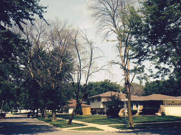City to remove 800 trees affected by Emerald Ash Borer in Merrillville, IN | tree safety | Scoop.it
