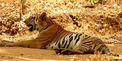 Protecting India's Heritage - Wildlife conservation | Mr Journalist | Wildlife | Scoop.it