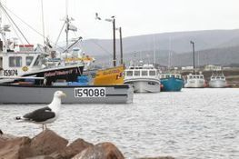 Lobster fishermen off the water Saturday - Cape Breton Post | Nova Scotia Fishing | Scoop.it