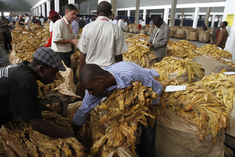 Can agriculture in Africa sustain a nourishing rural non-farm economy?   RoundUp: Research Uptake   Scoop.it