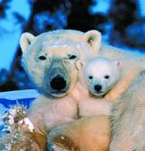 Canada's Big Five Safari | Easier | Eco Friendly Vacations | Scoop.it
