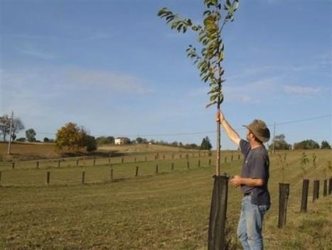 01/12/16 - L'Agroforesterie : des pratiques innovantes au service de l'économie et de l'environnement | INRA Montpellier | Scoop.it