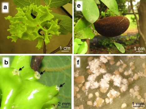 Nature Communications: An insect-induced novel plant phenotype for sustaining social life in a closed system (2012) | my universe | Scoop.it