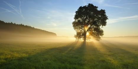 Daily Meditation: Awakening The Heart - Huffington Post | Meditation | Scoop.it