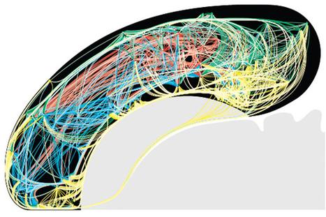 Notre cerveau est-il comparable à Internet ? | Actus décalés | Scoop.it