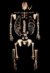 Ancient Hunter-Gatherers Kept in Touch - ScienceNOW | Mind Candy  { interdimensionally } Cubed... It's SO yesterday to be a Square | Scoop.it