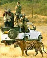Golden Triangle Tiger Tour, Golden Triangle Tour, Tiger Tour Packages   Golden Triangle Tiger Tour packages   Scoop.it