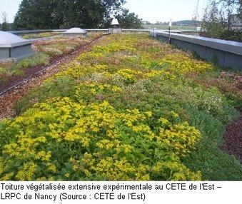 Impacts des toitures végétalisées sur la qualité des eaux pluviales | biodiversité en milieu urbain | Scoop.it