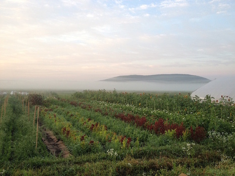 The upstate farm that New York City women built | Well+Good | Environnement Et Faune | Scoop.it