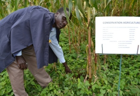 Kenyan farmers cut tilling to raise yields, store carbon - AlertNet | Climate Change, Agriculture & Food Security | Scoop.it