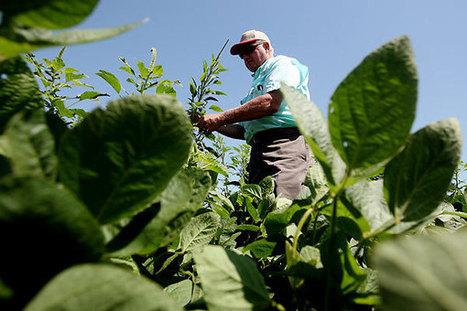 La catastrophe des OGM aux États-Unis, une leçon pour l'Union européenne | Think outside the Box | Scoop.it